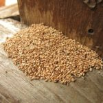 Just how much Damage Can a Termite Actually Do to a Home?