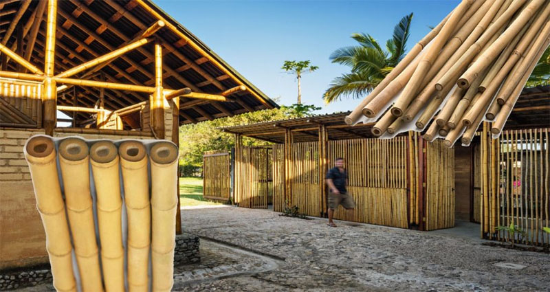 Bamboo – A Greener Home Building Material