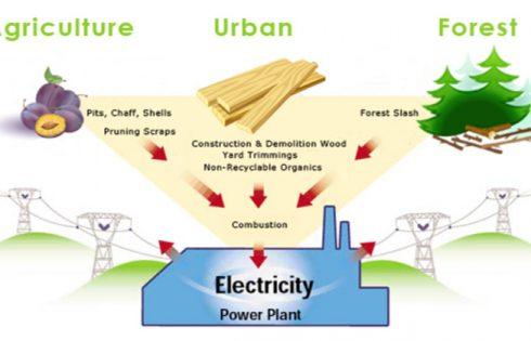 Advantages and Disadvantages of Biomass As Renewable Energy Sources